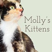 Molly's Kittens Updated Logo.jpg