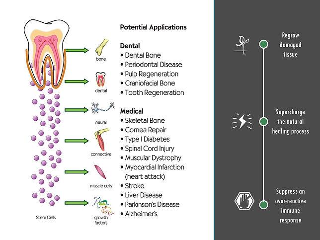 Potential Applicaios of Dental Stem Cells