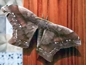 Un papillon m'a dit ...
