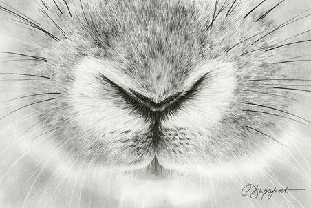 """""""Bunny"""""""