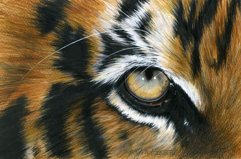 """Tigre"""