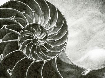 """""""Nautilus"""""""
