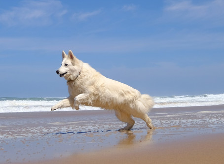 Life's a beach! Dogs, summer and beaches - Lisbon region
