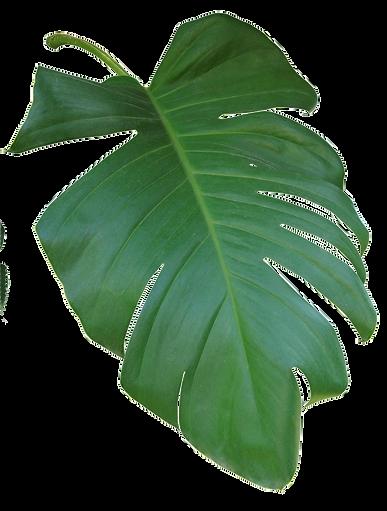 web-palm-3.png