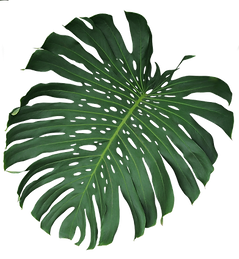 web-palm-2.png