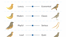 Design Descriptors & How They Might Differ from Client to Designer