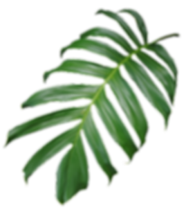 web-palm-1.png