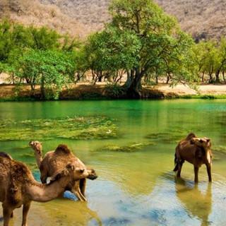 wadi-darbat-full-day_1000_500.jpg