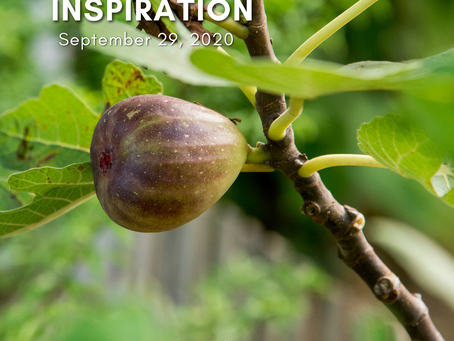Daily Inspiration - September 29
