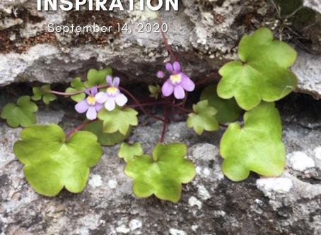 Daily Inspiration - September 14