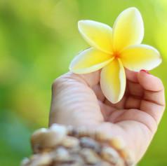 hawaii-2042053.jpg