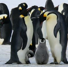 penguins-429128.jpg