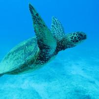 hawaii-2445609.jpg