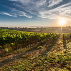 farm-land-during-sunset-51947.jpg