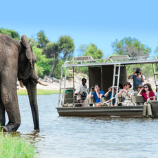 ZQ_Game viewing_elephant_83fc91d6-5153-4