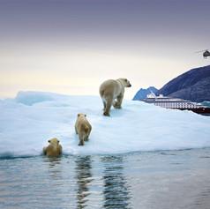 Scenic Eclipse Polar Bears Greenland.jpg