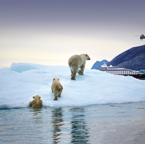 Scenic Eclipse Polar Bears Greenland.jpg