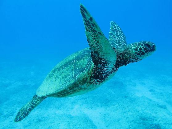 hawaii-2445609 (1).jpg