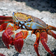 crab-298346.jpg