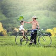 bicycle-1822528.jpg