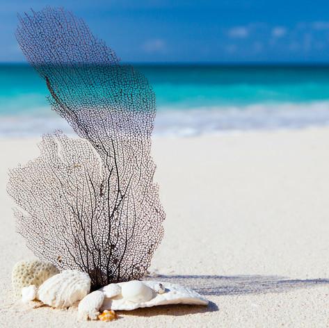 beach-84565_1920.jpg