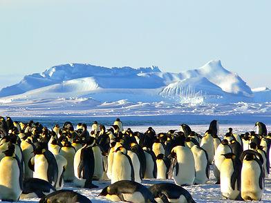 emperor-penguins-429127.jpg