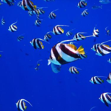 fish-2733323.jpg