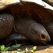 giant-tortoises-2516486.jpg