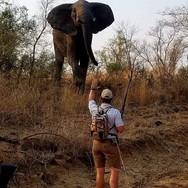 Tintswalo Elephant Walk