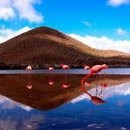 The-Galapagos-Islands-Floreana-Island-Co