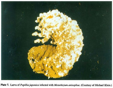champignon insect3.JPG