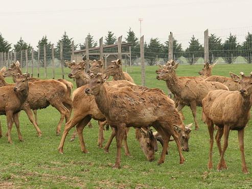 Na Smolenickom zámku sa stretli odborníci a priaznivci farmových chovov jeleňovitých.
