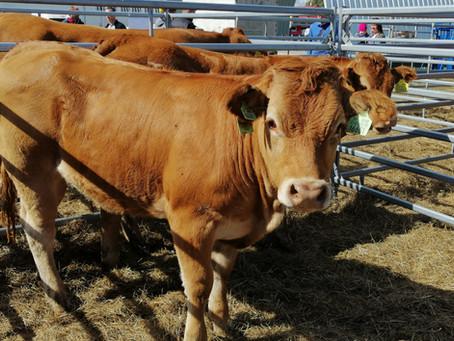 Čo znamená zdravý a plodný býk