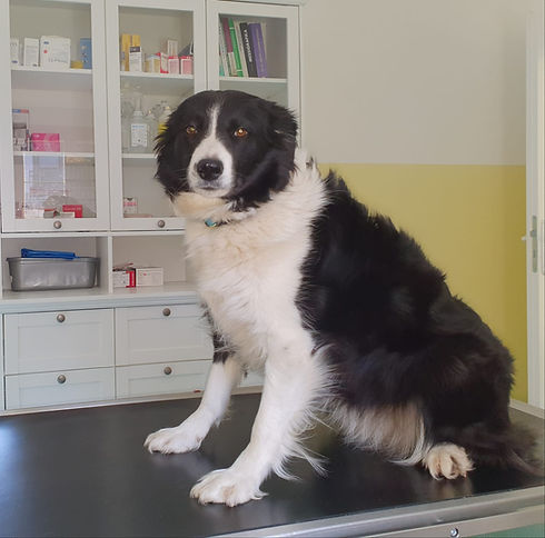arc_slovakia_veterinarna_ambulancia_male