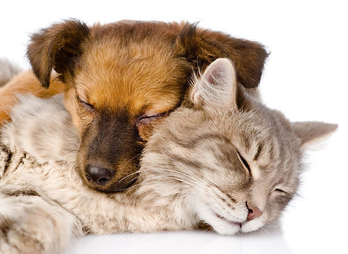 cats-and-dogs-living-together.jpg