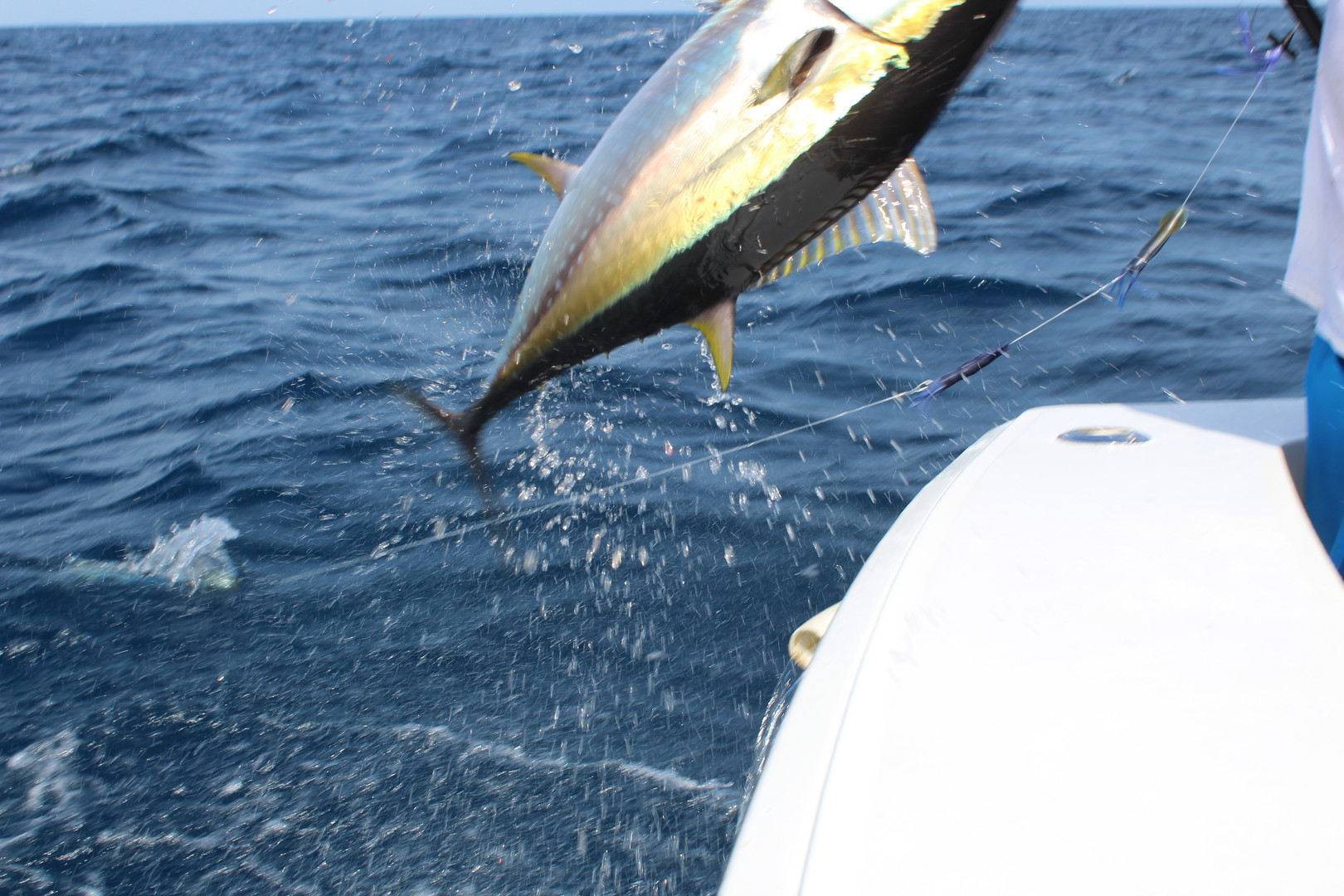 Amber Jack Panama fishing charter