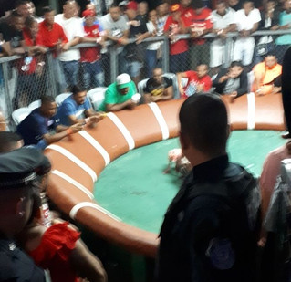 Cockfighting in Panama City