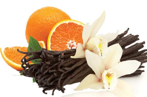 Cara Cara Orange Vanilla