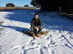 A los zorros en Muñico