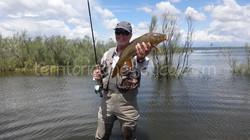 Los amigos de Madrid-Fishing