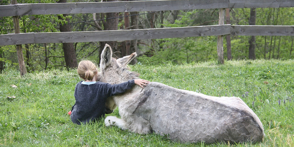 HIKING WITH DONKEYS: DISCOVERING THE ALPAGE LIFE (2)
