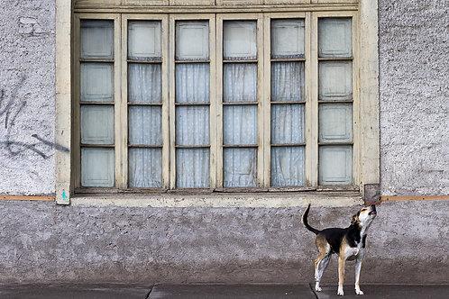 El perro del aullido