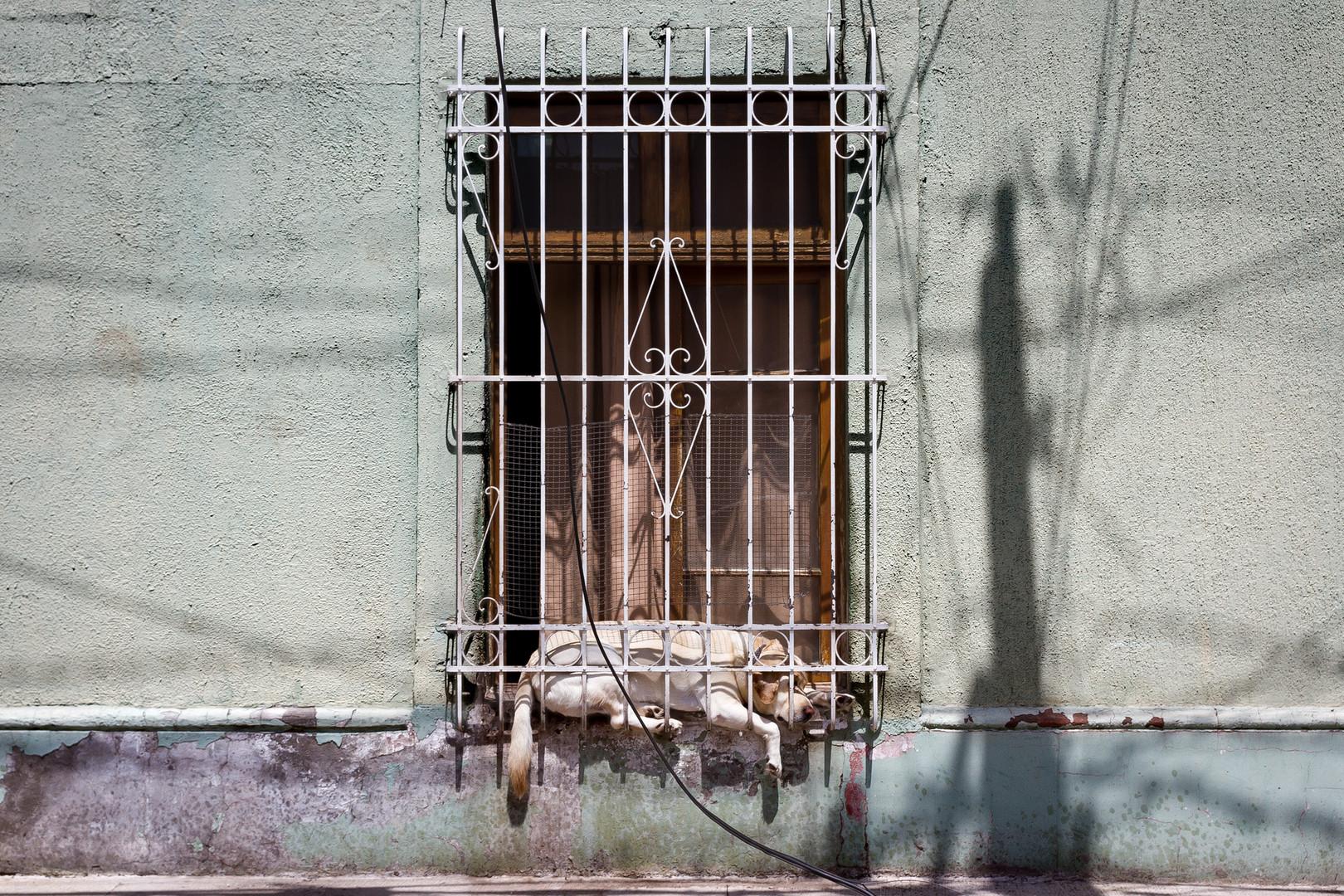 El perro en la ventana