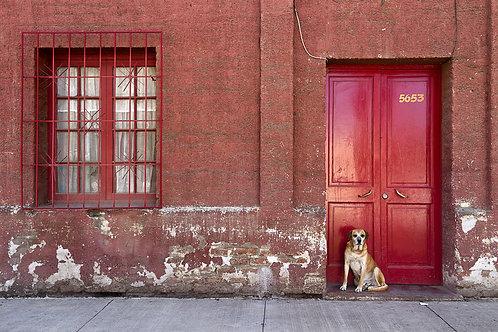 El perro en la puerta