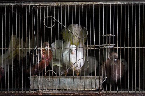 Las palomas