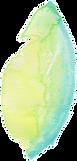 petale-01.png