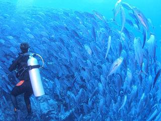 ボホール島ツアー水中イメージ