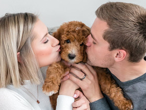 NEW PUPPY! Meet Our Goldendoodle