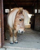 dolina koni  (1)_edited.jpg