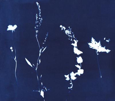 Meadow medley